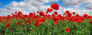 Dronfield to commemorate First World War Centenary